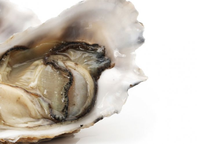 """""""Guinness Guide to Oysters"""" ist ein schönes Beispiel für gute Unternehmenskommunikation"""
